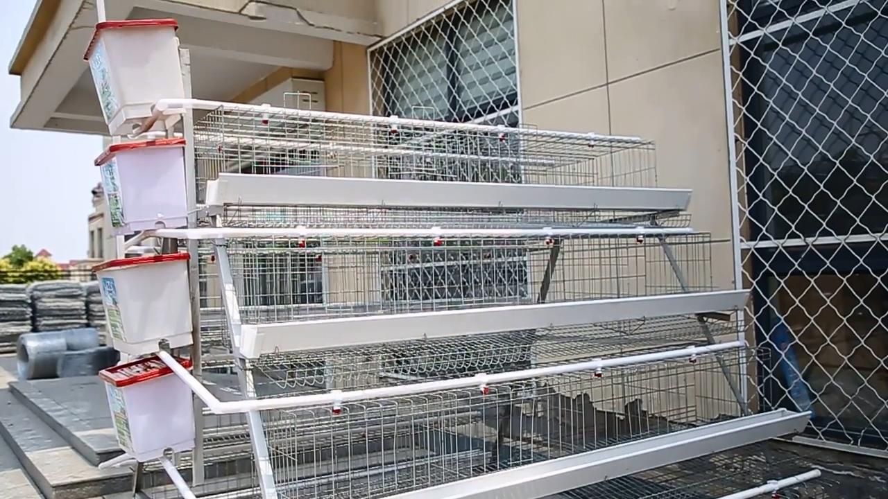עבודה חיסכון קניה משק עופות עוף סוללה שכבה כלובים לתרנגולות מטילים