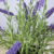 Hot Sales 34cm Artificial Purple Flower Potted Bonsai Plant Lavender Plant for Indoor Decoration Artificial Plants