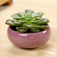 modern Ice-Crack Ceramic Flower Pots mini pots for plants round ceramic flower pots Juicy Plants pottery for home decor