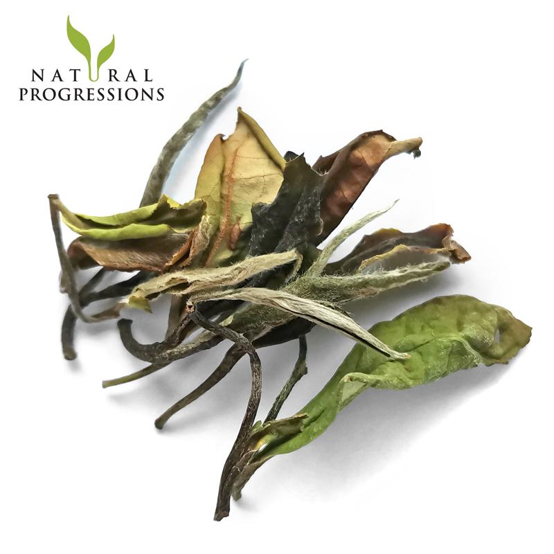 Organic White Tea Bai Mu Dan - 4uTea | 4uTea.com