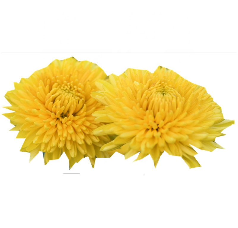 Hot sale Organic Chrysanthemum Flower Tea - 4uTea | 4uTea.com