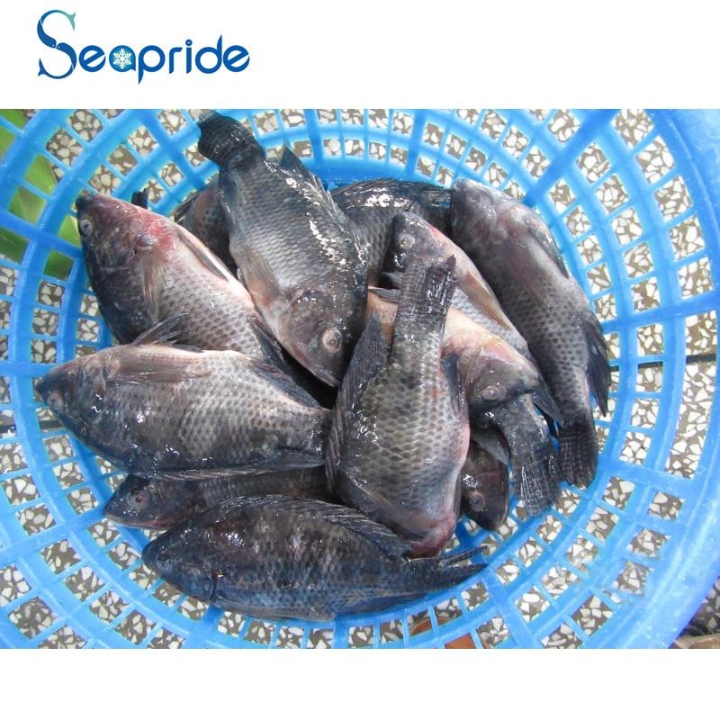 Горячая продажа весь круглый 90% NW замороженная черная Тилапия Рыба Цена за кг