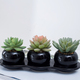 high quality wholesale beautiful ceramic potted assorted artificial succulent plants bonsai for home desk decoration