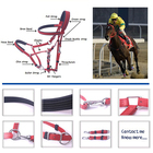 Horse Equestrian Bridle Wholesale Horse Equipment Personalized Waterproof PVC Bridle Horse Adjustable Racing Equestrian Custom Colorful Horse Bridle