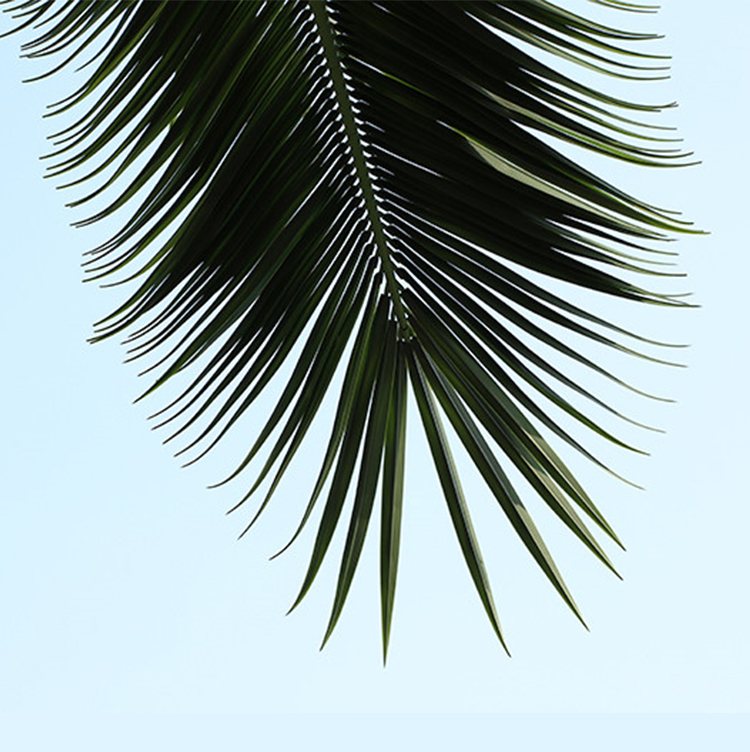 High Temperature Anti-fading Coconut Tree Artificial Decoration Outdoor Palm Trees Leaves