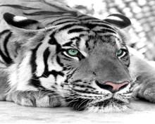 3D обои на заказ, 3D Фотофон с изображением Льва животных, настенная большая гостиная, фон с изображением животных, декоративная живопись mur(Китай)