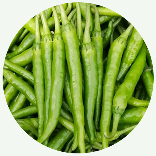 Hot Selling Vegetable <strong>Seeds</strong> Hybrid Green <strong>Pepper</strong> No.1 for <strong>Planting</strong>