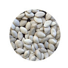 Seed Cheap Price Factory Directly Sale Snow White Pumpkin Seed