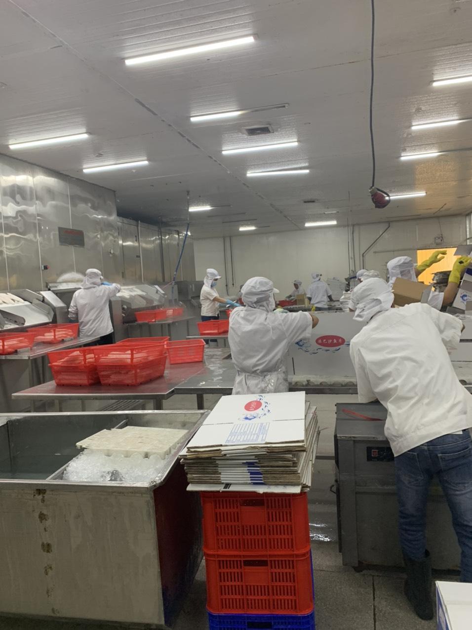 Frozen Vietnam Pangasius Fillet Basa Fillet (Packaging: Vacuum Pack)