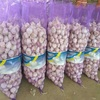 /product-detail/best-fresh-natural-garlic-price-new-crop-hot-sales-62013380225.html