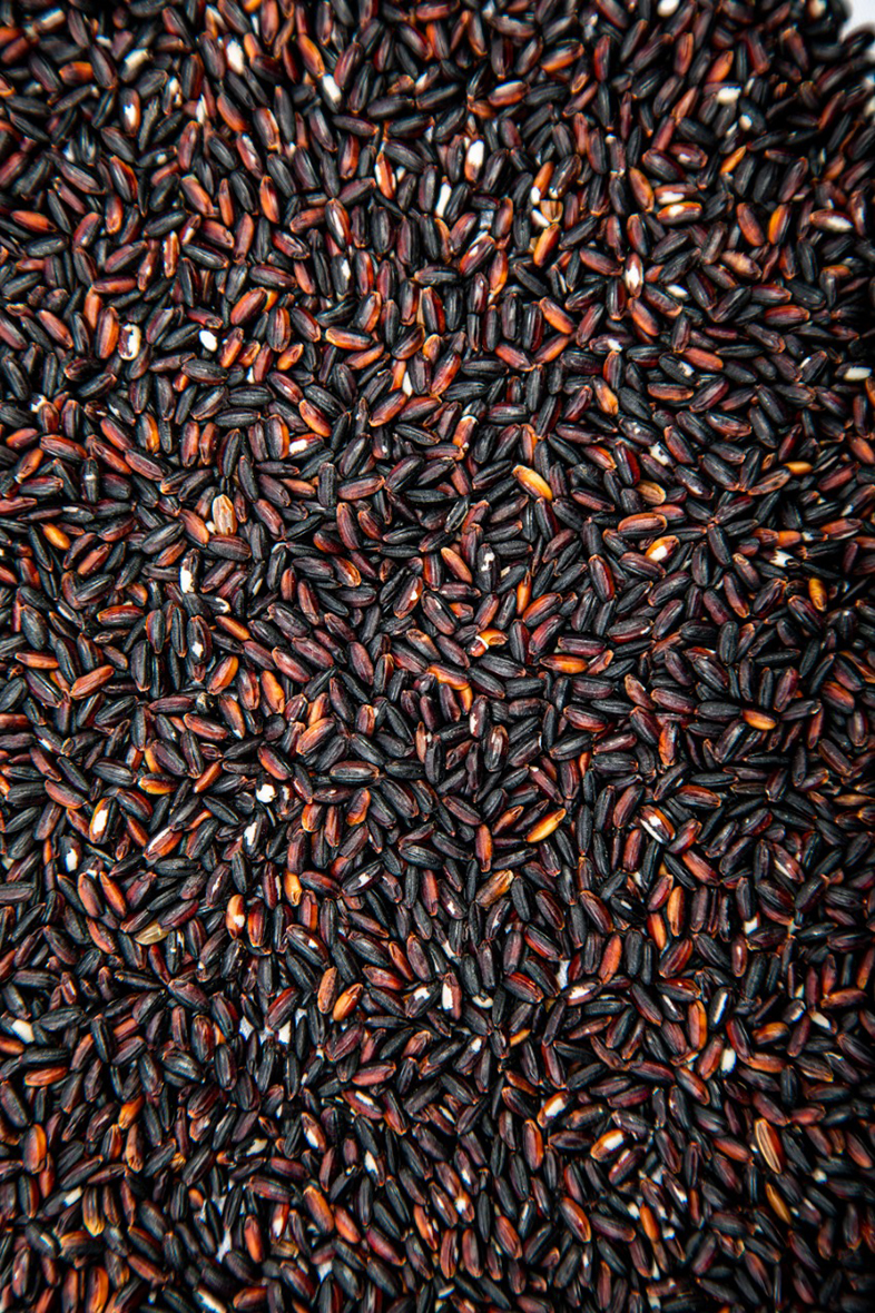 Premium quality black rice round grain wholesale suppliers, healthy and nutritious, the best price