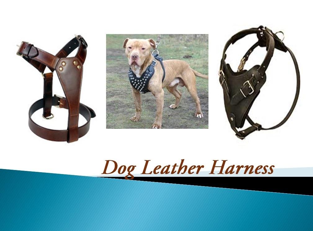 Wholesale Eco-friendly dog Training leash Collar Custom design/pet supply accessories