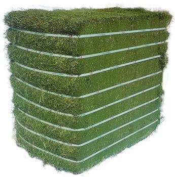 Alfafa Clover Hay / Dehydrated Alfalfa cubes ready for Export
