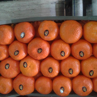 Citrus Fruits/Mandarin Orange/Fresh Orange