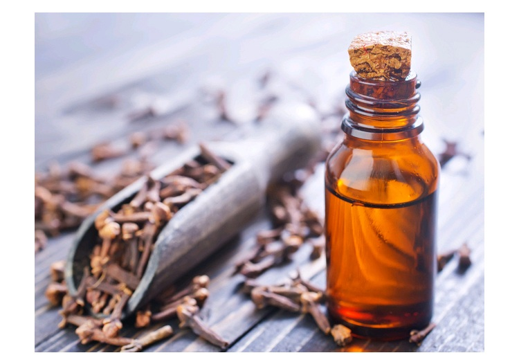 Wholesale Pure Therapeutic Grade Highest Quality Clove Bud Essential Oil