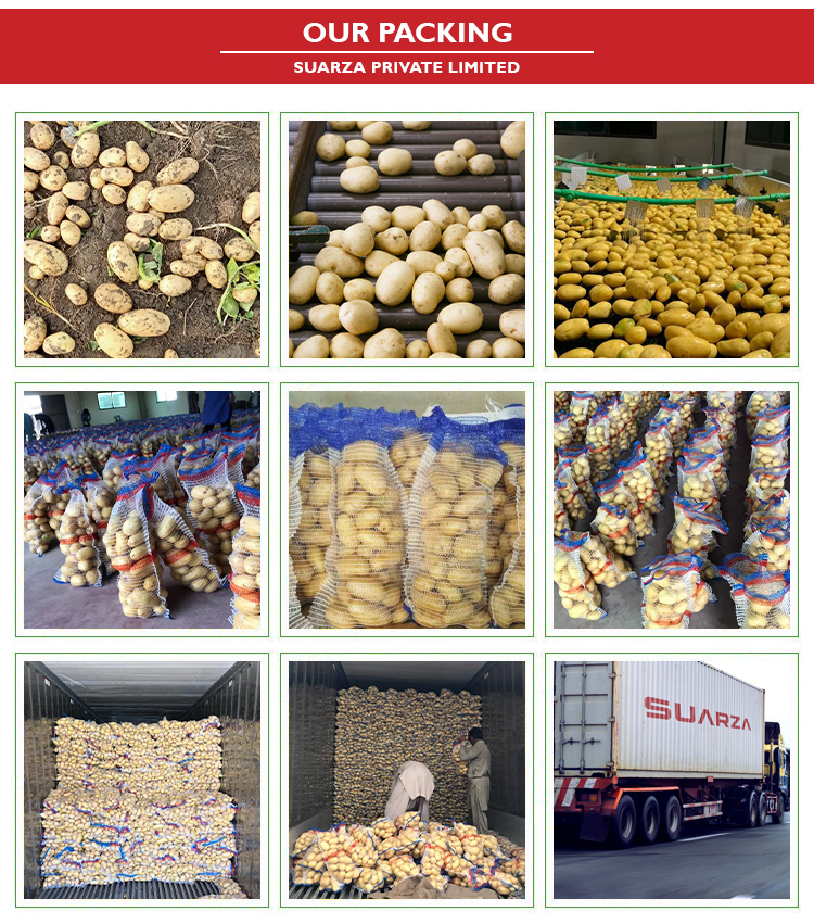 Pakistani Organic/Healthy/Fresh Vegetable Potatoes with Top Grade