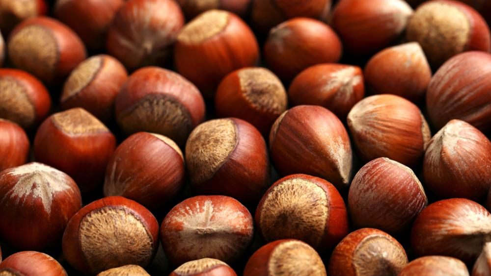 Hazelnut , Shell, Organic , High Quality , Premium Selected Orginal Turkish