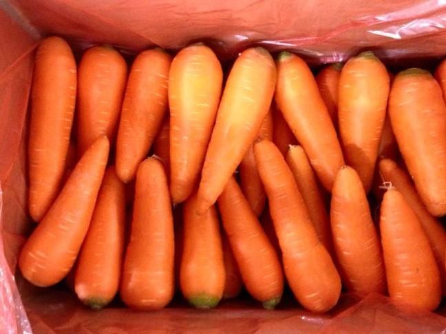 VIETNAM FRESH CARROTS- FARM PRICE - GOOD QUALITY