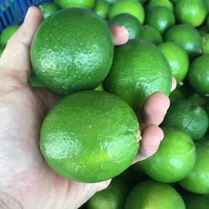 Wholesale Vietnam Fresh Seedless Lime / Green Lemon High Quality.