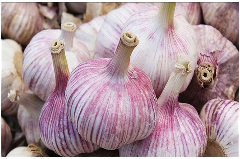 Fresh White Garlic supplier For sale