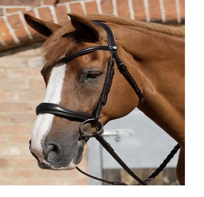 Windsor Equestrian Products Cuir Licol