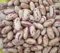 Non-GMO Light Speckled Kidney Bean 2019 Crop Kidney Bean
