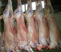 Sheep/mutton/lamb frozen certified & fully organice halal meat price from Kazakhstan