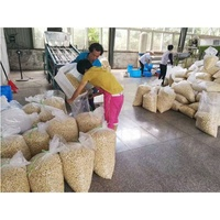 2019 cheapest import cashew nuts from vietnam shelling machine cashew cashew nuts dryer