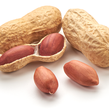 Suppliers and Exporters of Peanut