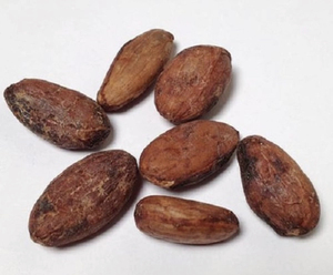 Best Price Cocoa Beans for the Buyers from Uganda Africa fermented 5 days  organic fair trade