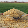Premium Quality Soybean/ Soya Bean/ Soybeans Seeds From