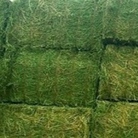 Hot Selling Alfalfa Hay fish meal for Good Prices