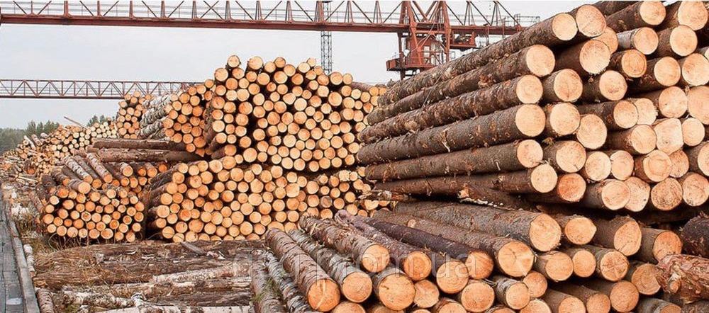 Ukraine Timber Log / Sawlogs /Wood round logs / lumber /PINE / SPRUCE / LARCH / BIRCH