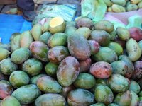 fresh mango for sale