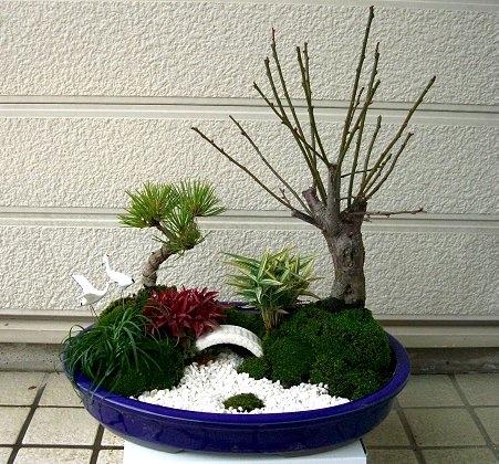 The Best Selling White Pebbles For Bonsai, Gardening, Patio, Lawn, Miniture  Garden