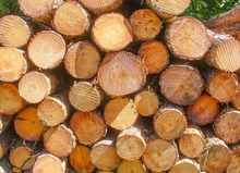 Black Walnut Viu <span class=keywords><strong>Logs</strong></span>