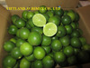 FRESH LIME SEEDLESS HIGH QUALITY/ GREEN COLOR