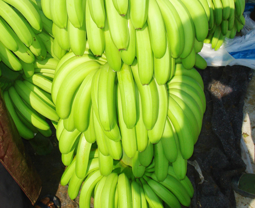 FRESH CAVENDISH BANANA/ FRESH BANANA/ FRESH FRUIT