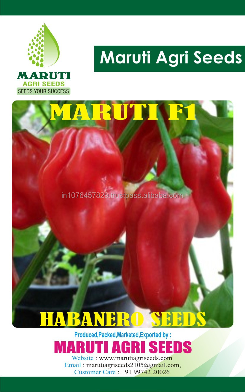 NEW CROP of 2016 HABENARO HOT PEPPER SEEDS