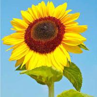 Pumpkin Seeds Raw - Buy Pumpkin Seeds Raw,Seeds Sunflower,Organic ...