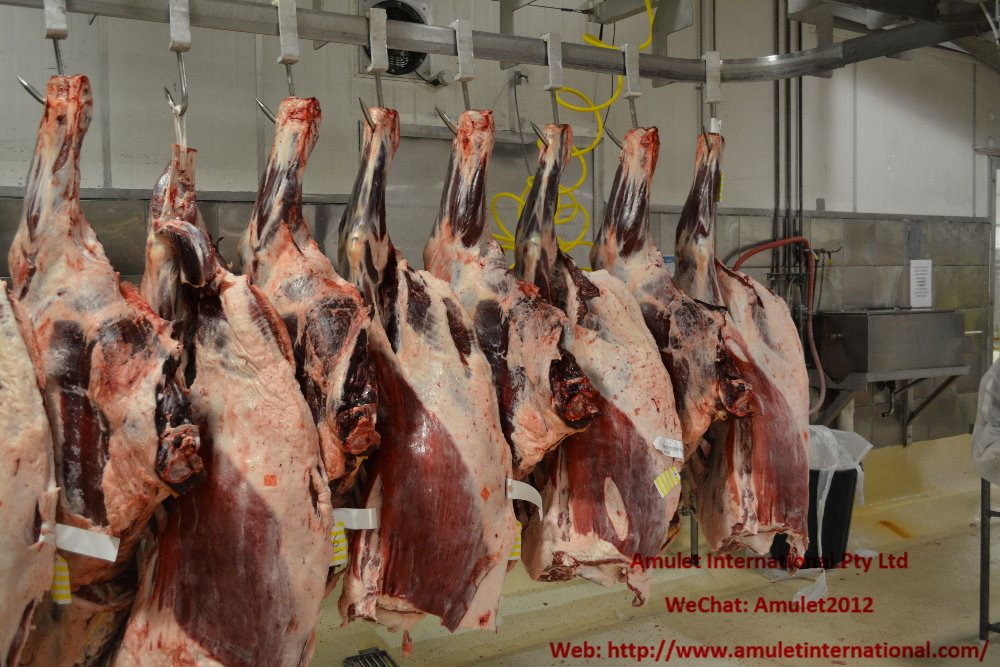 Slaughter Cattle Grades and Standards