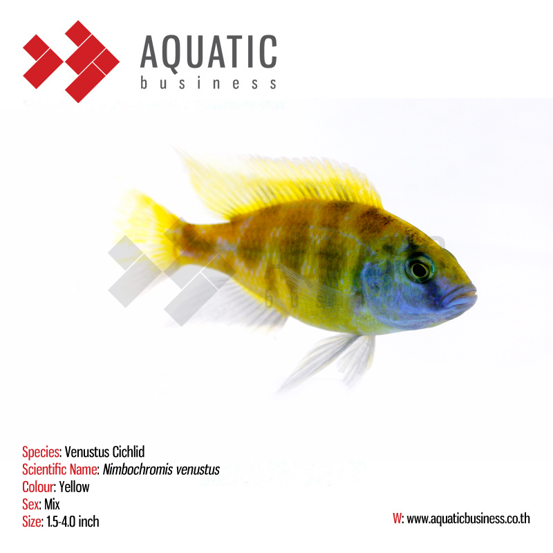 Tropical fish wholesale for Wholesale tropical fish