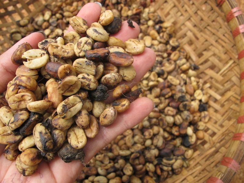 Civet Coffee (robusta - Arabica) At Vietnam (real 100%)