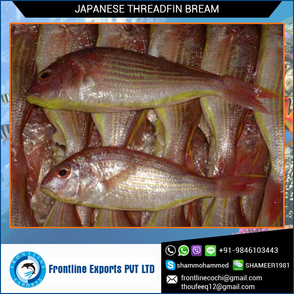 Seller and Exporter of Japanese Threadfin Bream