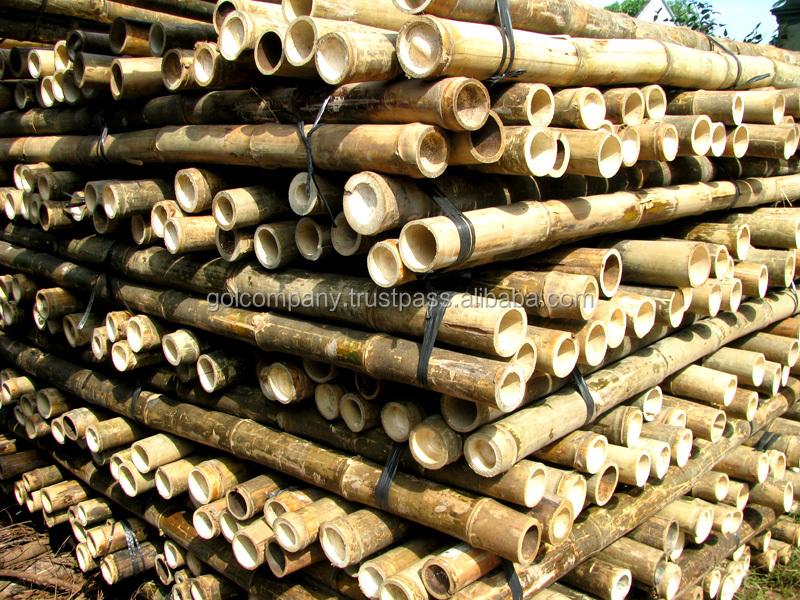 Wholesale Bamboo Raw Materials Natural Tam Vong Bamboo
