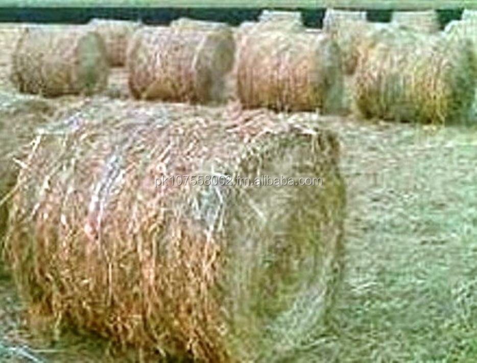 Pak Punjab Rice Straw/hay