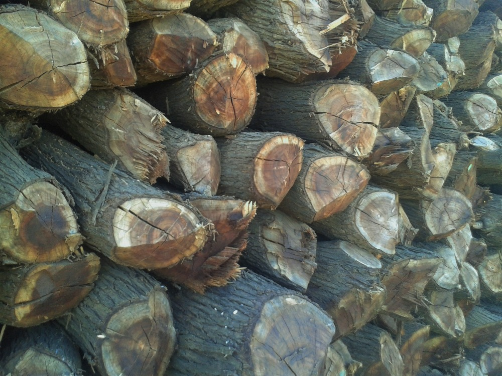 soudan l 39 acacia nilotica chauffage buy bois de chauffage bois de chauffage naturel bois de. Black Bedroom Furniture Sets. Home Design Ideas