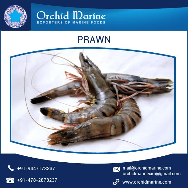 Leading Exporter of Prawns/Seafood/Wild Shrimps/Prawns for Sale