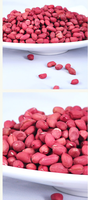 Raw Peanuts Ground Nut