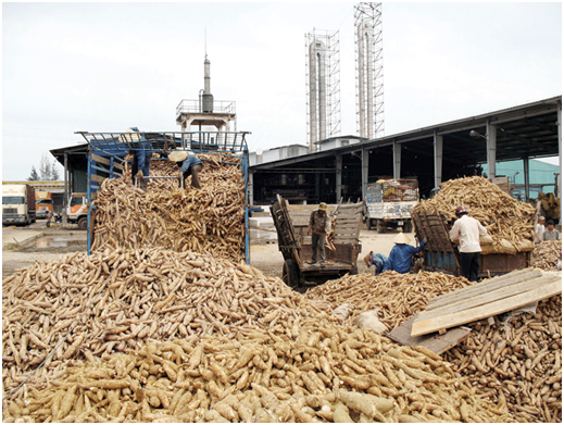 Dried tapioca residue for animal feed at low cost, View cassava, VIETGO Product Details from VIETGO COMPANY LIMITED on Alibaba.com519 x 391 png 462kB